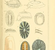 The Animal Kingdom by Georges Cuvier, PA Latreille, and Henry McMurtrie 1834  258 - Mollusca Mollusks by wetdryvac