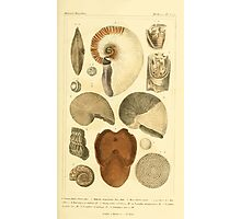 The Animal Kingdom by Georges Cuvier, PA Latreille, and Henry McMurtrie 1834  217 - Mollusca Mollusks Photographic Print