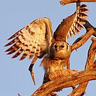THE GIANT EAGLE OWL - and the weavers nest by Magaret Meintjes