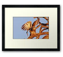 THE GIANT EAGLE OWL - and the weavers nest Framed Print