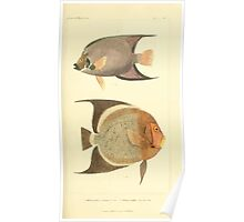 The Animal Kingdom by Georges Cuvier, PA Latreille, and Henry McMurtrie 1834  126 - Pisces Fish Poster