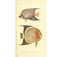 The Animal Kingdom by Georges Cuvier, PA Latreille, and Henry McMurtrie 1834  126 - Pisces Fish Photographic Print