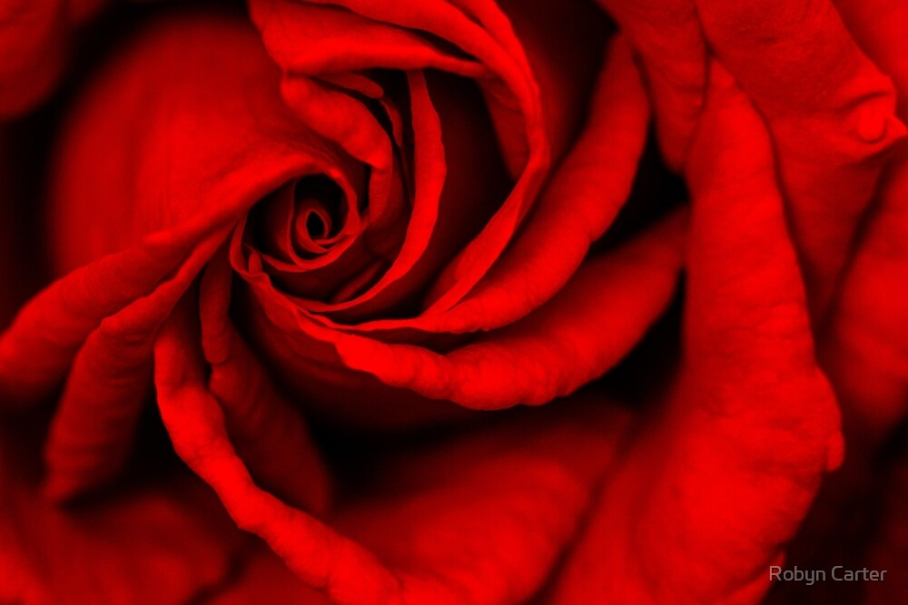Rose Red by Robyn Carter