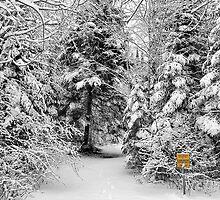 Snow In May by Teresa Zieba