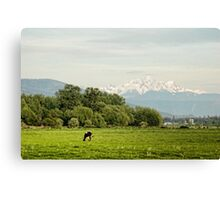 Farm Country Canvas Print
