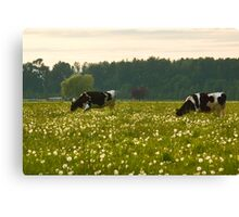 Happy Cows! Canvas Print
