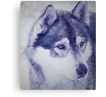 Beautiful husky dog portrait Canvas Print