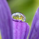 Spring delight by Melinda Gaal