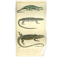 The Animal Kingdom by Georges Cuvier, PA Latreille, and Henry McMurtrie 1834  008 - Reptilia Reptiles Poster