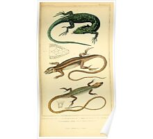 The Animal Kingdom by Georges Cuvier, PA Latreille, and Henry McMurtrie 1834  012 - Reptilia Reptiles Poster