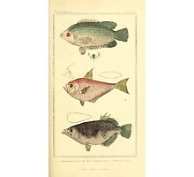 The Animal Kingdom by Georges Cuvier, PA Latreille, and Henry McMurtrie 1834  137 - Pisces Fish Photographic Print