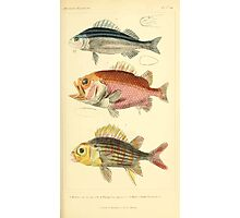 The Animal Kingdom by Georges Cuvier, PA Latreille, and Henry McMurtrie 1834  068 - Pisces Fish Photographic Print