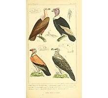 The Animal Kingdom by Georges Cuvier, PA Latreille, and Henry McMurtrie 1834 641 - Aves Avians Birds Photographic Print