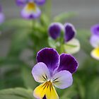 Don't Call Us Pansies by patjila