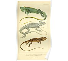The Animal Kingdom by Georges Cuvier, PA Latreille, and Henry McMurtrie 1834  023 - Reptilia Reptiles Poster