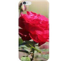 Rose Red iPhone Case/Skin