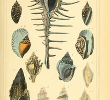 The Animal Kingdom by Georges Cuvier, PA Latreille, and Henry McMurtrie 1834  252 - Mollusca Mollusks by wetdryvac