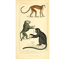 The Animal Kingdom by Georges Cuvier, PA Latreille, and Henry McMurtrie 1834 573 - Mammalia Mammals Photographic Print