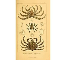 The Animal Kingdom by Georges Cuvier, PA Latreille, and Henry McMurtrie 1834  314 - Crustacea Crustaeans Photographic Print