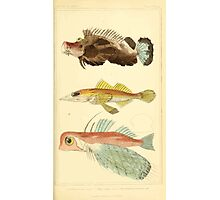 The Animal Kingdom by Georges Cuvier, PA Latreille, and Henry McMurtrie 1834  066 - Pisces Fish Photographic Print