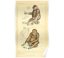 The Animal Kingdom by Georges Cuvier, PA Latreille, and Henry McMurtrie 1834 571 - Mammalia Mammals Poster
