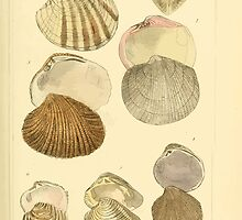 The Animal Kingdom by Georges Cuvier, PA Latreille, and Henry McMurtrie 1834  277 - Mollusca Mollusks by wetdryvac