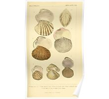 The Animal Kingdom by Georges Cuvier, PA Latreille, and Henry McMurtrie 1834  277 - Mollusca Mollusks Poster