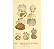 The Animal Kingdom by Georges Cuvier, PA Latreille, and Henry McMurtrie 1834  277 - Mollusca Mollusks Photographic Print