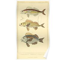 The Animal Kingdom by Georges Cuvier, PA Latreille, and Henry McMurtrie 1834  091 - Pisces Fish Poster