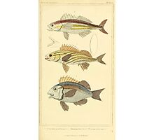 The Animal Kingdom by Georges Cuvier, PA Latreille, and Henry McMurtrie 1834  091 - Pisces Fish Photographic Print