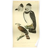 The Animal Kingdom by Georges Cuvier, PA Latreille, and Henry McMurtrie 1834 649 - Aves Avians Birds Poster