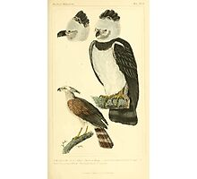 The Animal Kingdom by Georges Cuvier, PA Latreille, and Henry McMurtrie 1834 649 - Aves Avians Birds Photographic Print