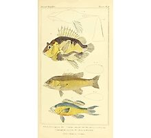 The Animal Kingdom by Georges Cuvier, PA Latreille, and Henry McMurtrie 1834  056 - Pisces Fish Photographic Print