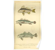 The Animal Kingdom by Georges Cuvier, PA Latreille, and Henry McMurtrie 1834  111 - Pisces Fish Poster