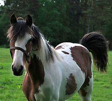 two coloured horse by Tony Kemp