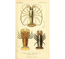 The Animal Kingdom by Georges Cuvier, PA Latreille, and Henry McMurtrie 1834  333 - Crustacea Crustaeans Photographic Print