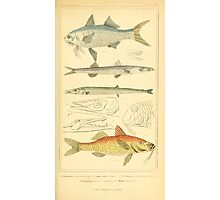 The Animal Kingdom by Georges Cuvier, PA Latreille, and Henry McMurtrie 1834  073 - Pisces Fish Photographic Print