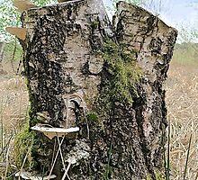 Stump by John Thurgood