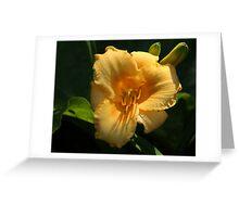 Stella De Oro Lily Greeting Card