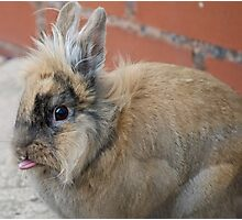 Patch (Rabbit) cheeky Photographic Print
