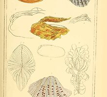 The Animal Kingdom by Georges Cuvier, PA Latreille, and Henry McMurtrie 1834  260 - Mollusca Mollusks by wetdryvac