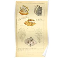 The Animal Kingdom by Georges Cuvier, PA Latreille, and Henry McMurtrie 1834  260 - Mollusca Mollusks Poster