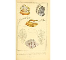 The Animal Kingdom by Georges Cuvier, PA Latreille, and Henry McMurtrie 1834  260 - Mollusca Mollusks Photographic Print