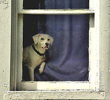 Doggie In The Window by Kate Adams