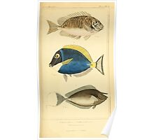 The Animal Kingdom by Georges Cuvier, PA Latreille, and Henry McMurtrie 1834  156 - Pisces Fish Poster
