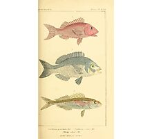 The Animal Kingdom by Georges Cuvier, PA Latreille, and Henry McMurtrie 1834  118 - Pisces Fish Photographic Print
