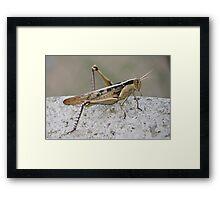 Red Locust Framed Print
