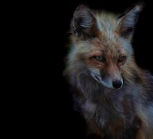 Vulpes by Jen Millard
