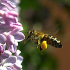 Bee in work (2) by zolim