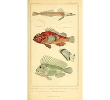 The Animal Kingdom by Georges Cuvier, PA Latreille, and Henry McMurtrie 1834  085 - Pisces Fish Photographic Print